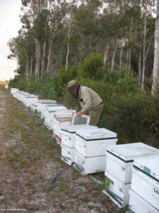 Checking honey hives